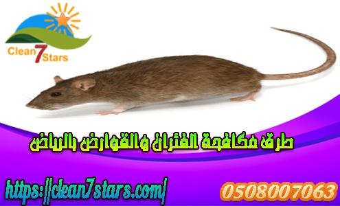 طرق مكافحة الفئران والقوراض بالرياض